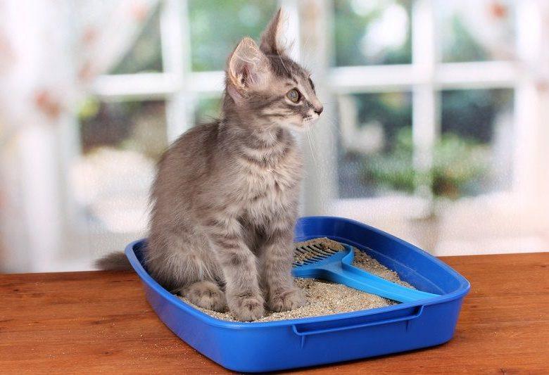 Kedi Kumunuz Ne Kadar Doğal?